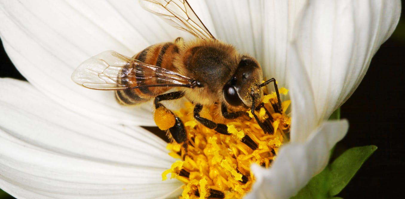 Caucasian honey bees