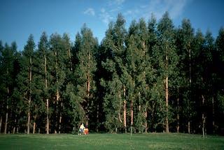 Australia S Plantation Boom Has Gone Bust So Let S Make