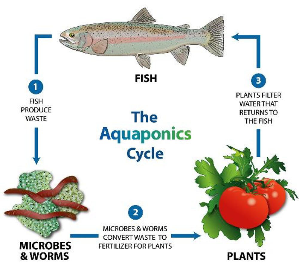the sustainable vegetables that thrive on a diet of fish poo