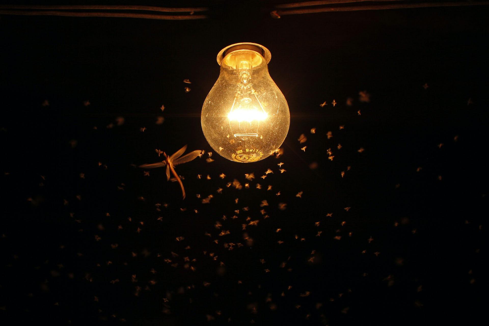 Bóng đèn sợi đốt truyển thống thu hút rất nhiều côn trùng
