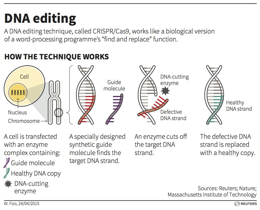 Why Treat Gene Editing Differently In Two Types Of Human Cells