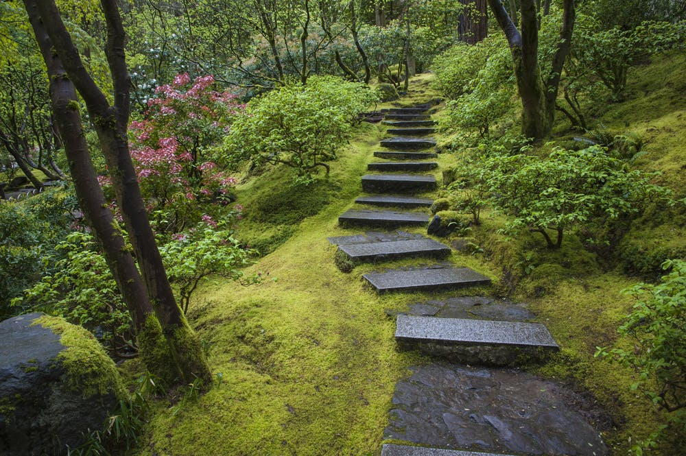 What S Behind Japan S Moss Obsession
