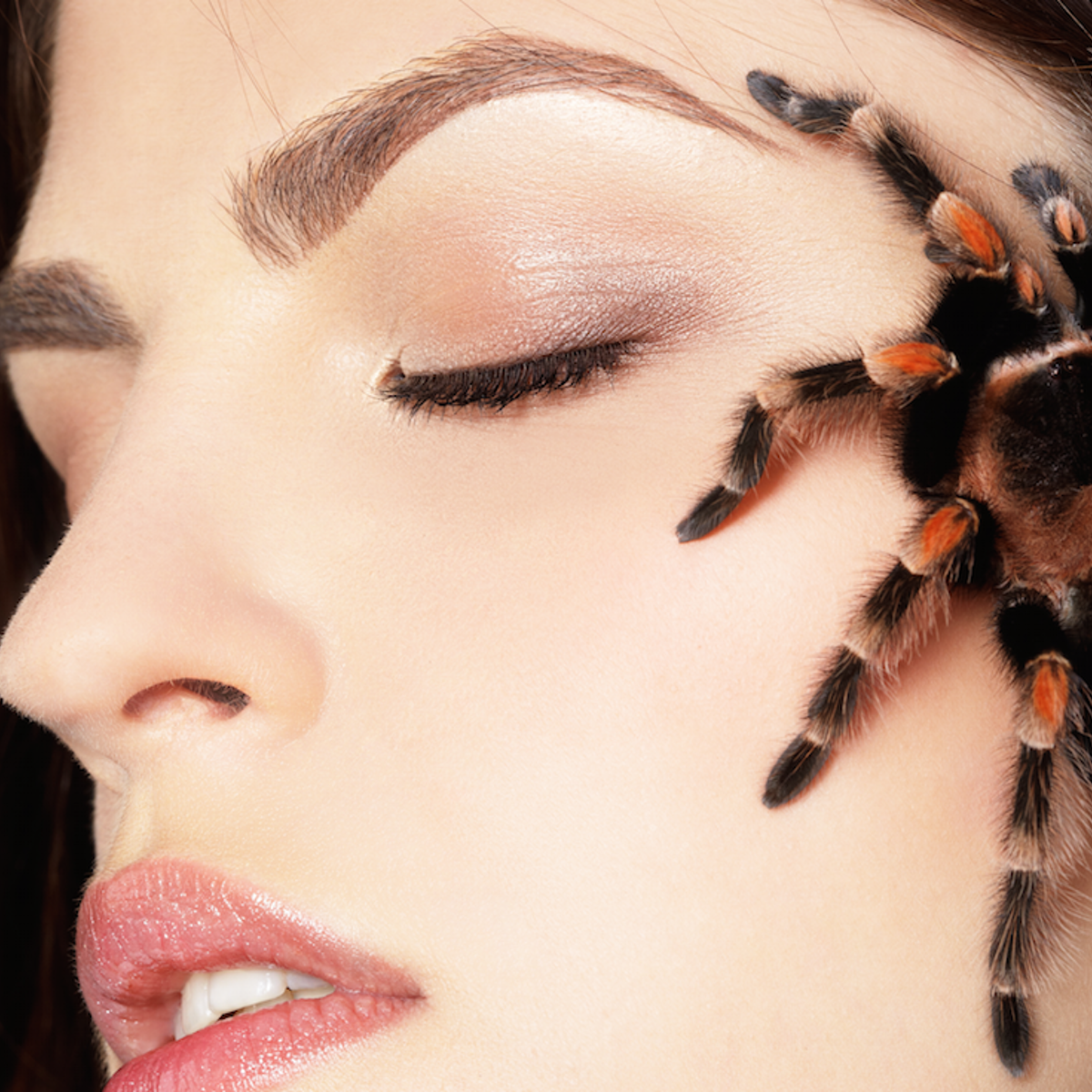 Busted myths: what spiders, chewing gum and haemorrhoids