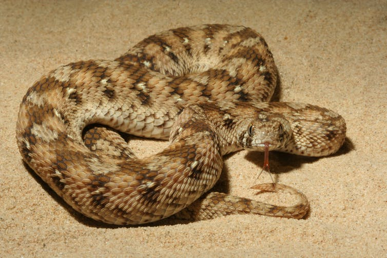 Are Australian snakes the deadliest in the world? Not even ...
