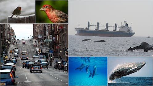 How noise pollution is changing animal behaviour