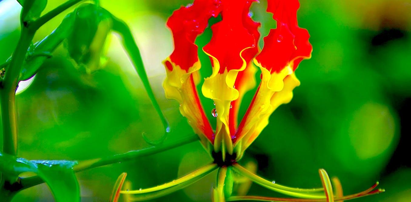 Little shop of horrors the australian plants that can kill you izmirmasajfo