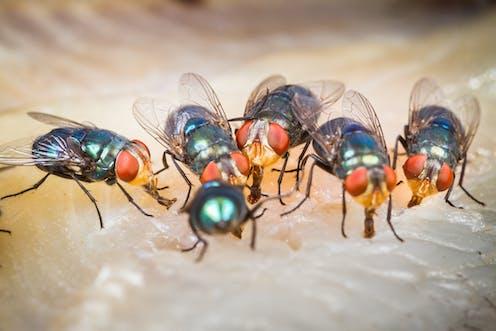 Buzz Buzz Slap Why Flies Can Be So Annoying