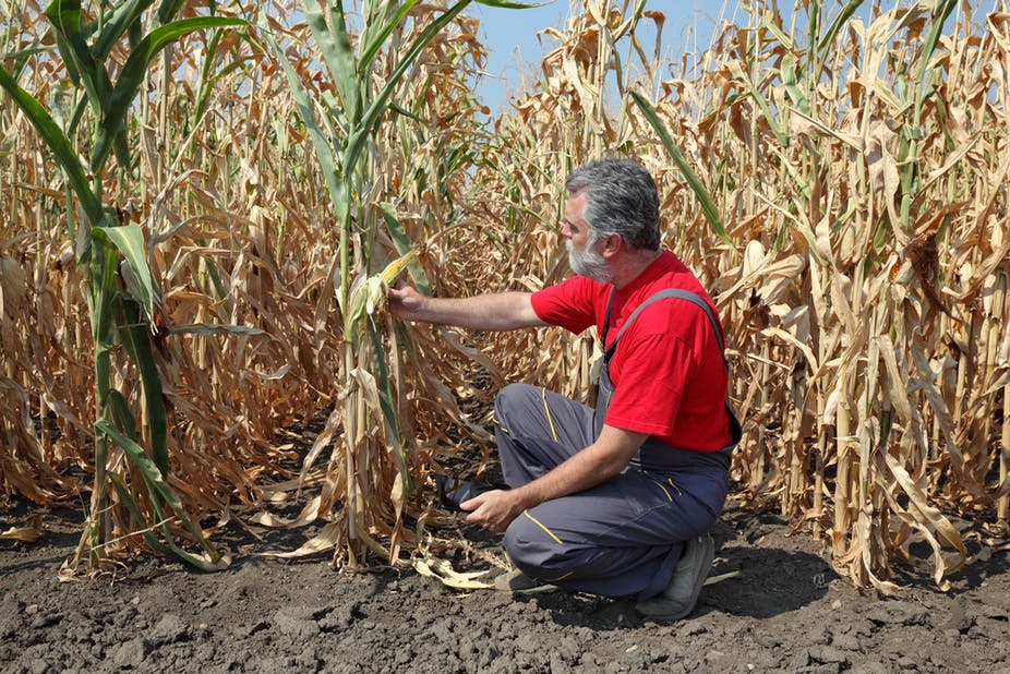 South Africa S Poor Face Rising Food Prices As Drought