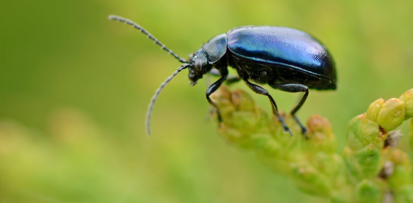 why we should learn to love all insects not just the ones that