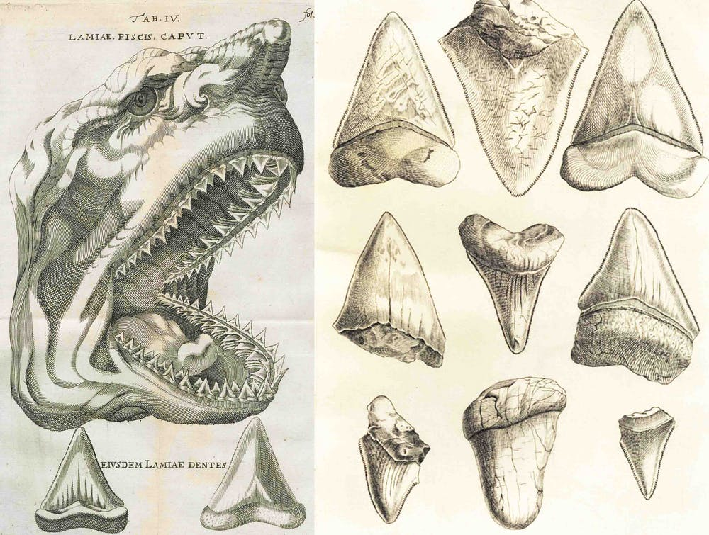 Giant monster Megalodon sharks lurking in our oceans: be serious!