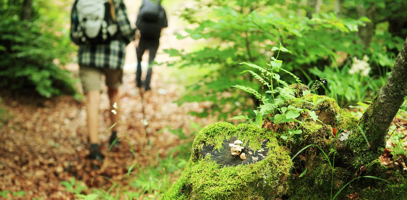 Why A Walk In The Woods Really Does Help Your Body And