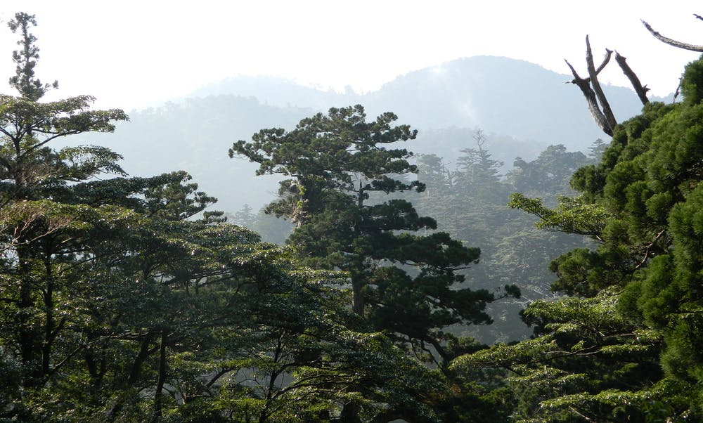 Bathe Yourself In The Forests Of Japans Yakushima Island Alan Logan Author Provided