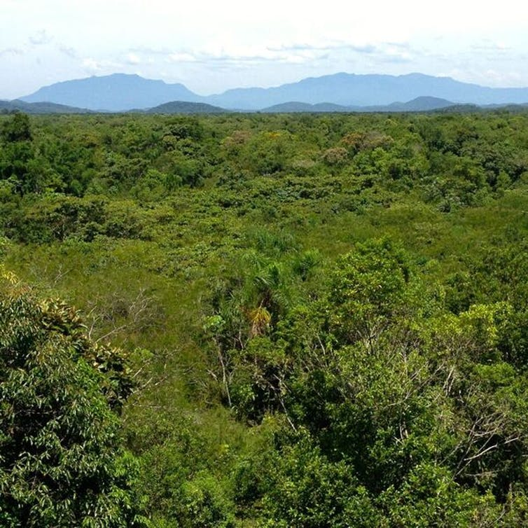 research paper on forest ecology Research papers : tropical forest ecology relationship between annual rainfall and tree mortality in a tropical dry forest: forest research for the 21st century.