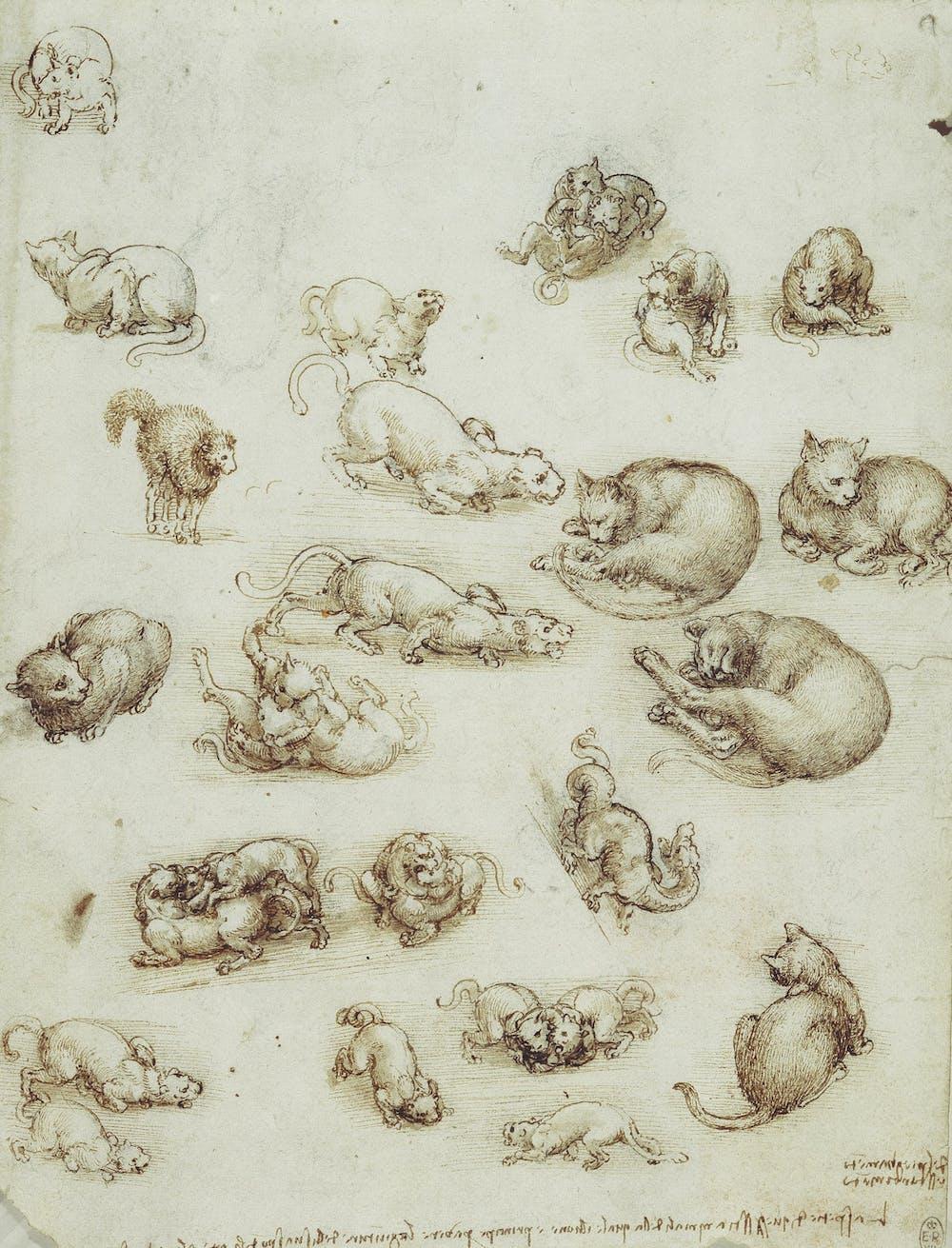 Why Leonardo Da Vinci Would Have Aced The Internet Cat Craze