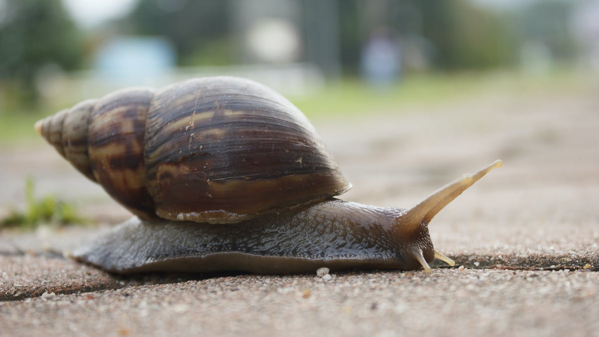 Download How To Find A Snail In Your Backyard Background ...