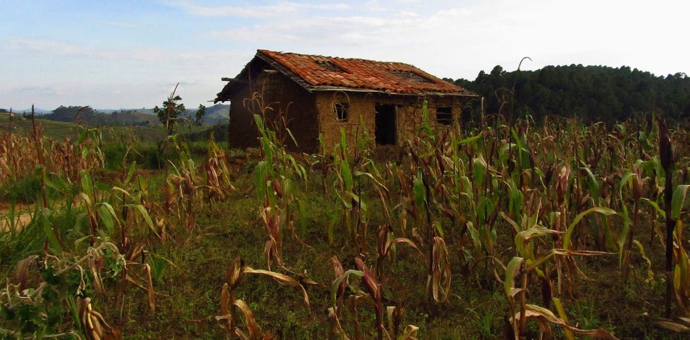 Why the 'Green Revolution' is making farmers poorer in Rwanda