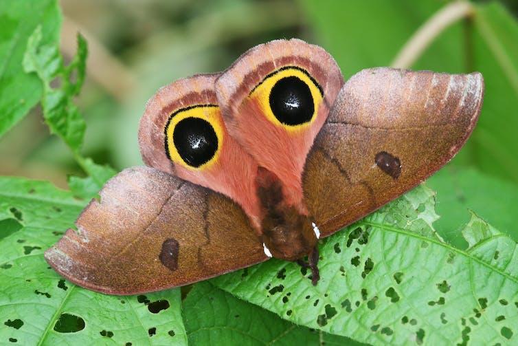 Les insectes, un modèle de sensibilisation à l'environnement