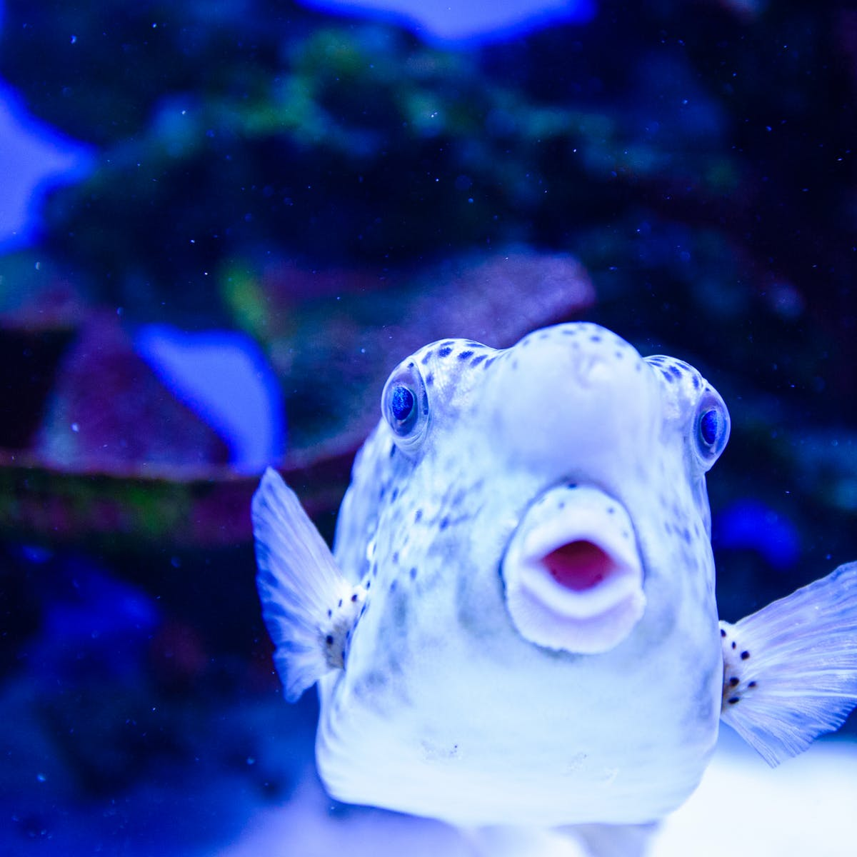 Do fish have feelings? Maybe