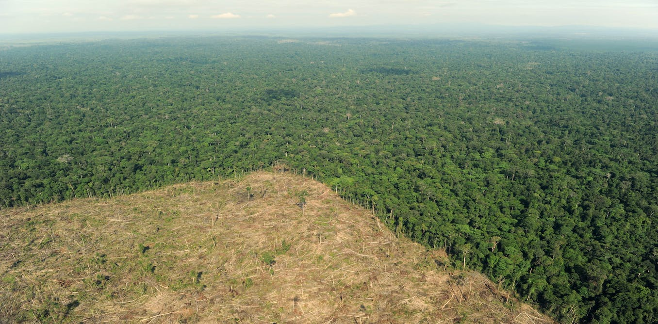 destruction of forests essay Deforestation of the amazon rainfores- humanities essay deforestation of the amazon rainforest gcse humanities coursework this essay will investigate the.