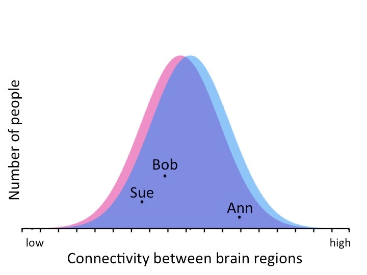 Brain difference human in sex