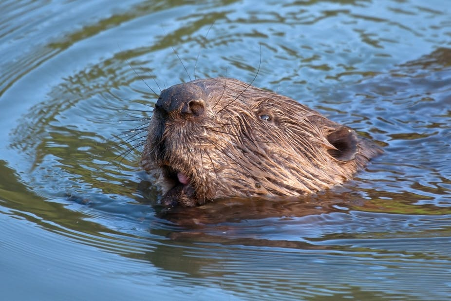otter chaos the dam busters awesome animals broad michael field jim