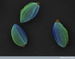 Know your bugs – a closer look at viruses, bacteria and parasites