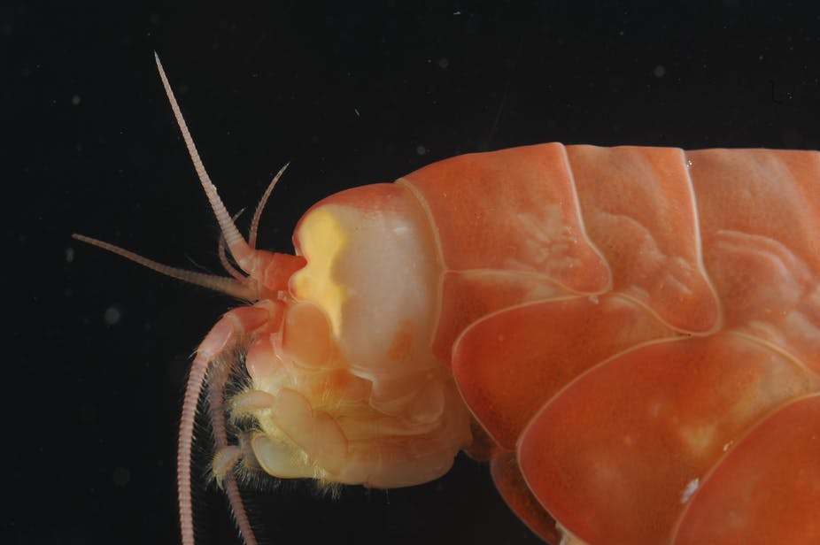 Ten things you never knew about the oceans deepest places publicscrutiny Images