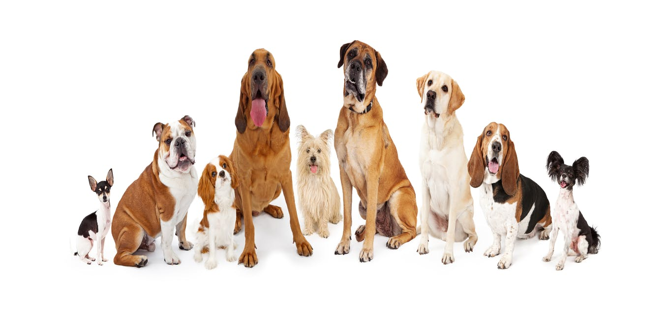 Breeds Of Dogs Different Species