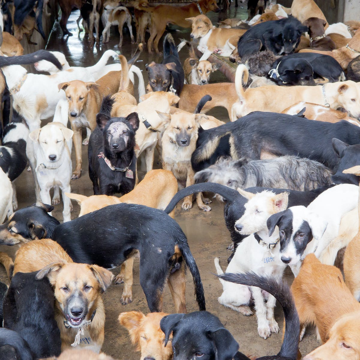 The truth about cats and dogs (and how they are consumed in