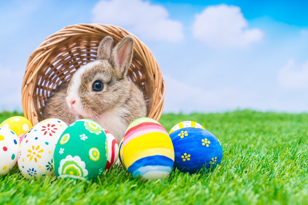 Image result for picture of easter bunny