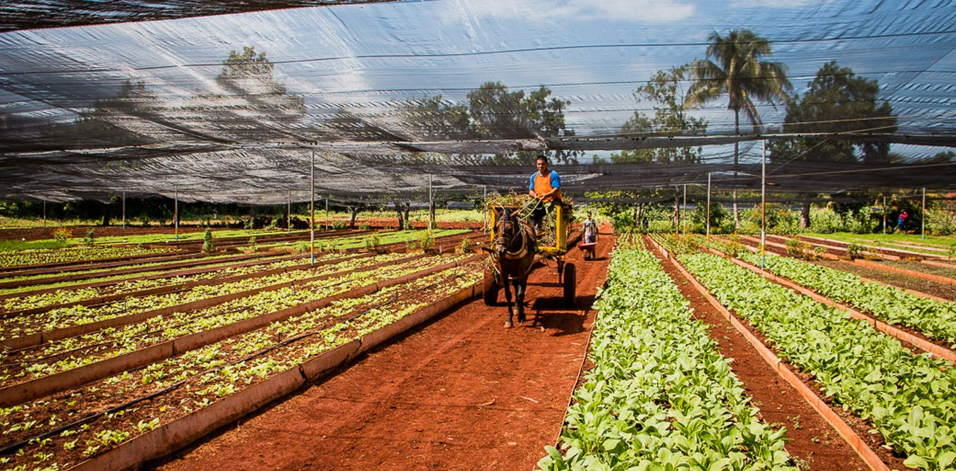 The idea of increasing agricultural efficiency applies to traditional - The Idea Of Increasing Agricultural Efficiency Applies To Traditional 50