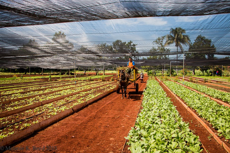Image result for Canada Supports Cuba in Agricultural Projects