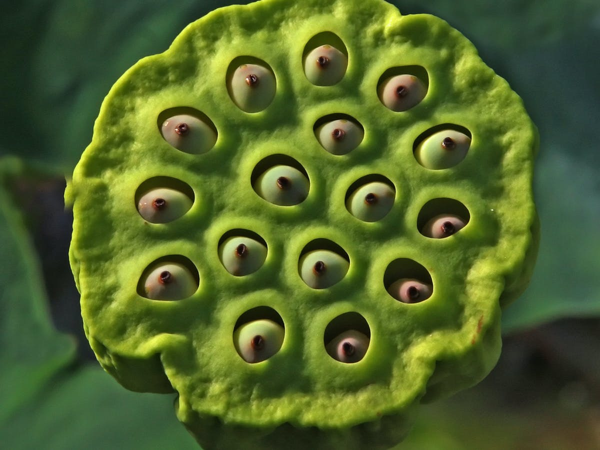 Trypophobia The Fear Of Holes Driven By The Internet And