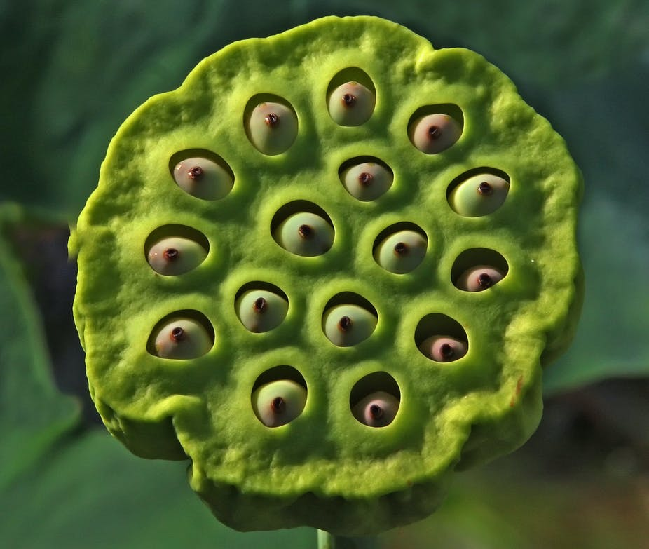 Trypophobia The Fear Of Holes Driven By The Internet And Mathematics