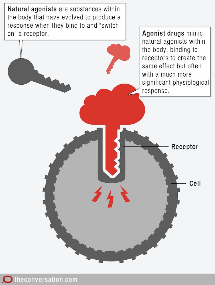94 chevy door lock diagram explainer how do drugs work #1