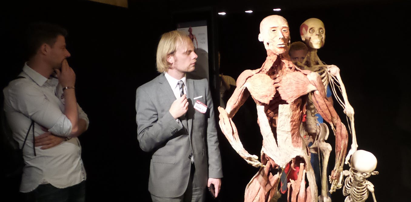 Reconsidering Body Worlds: why do we still flock to exhibits of dead ...
