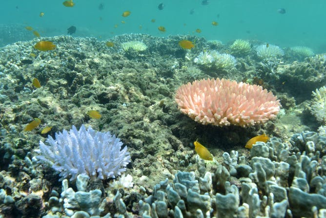 in pictures a close up look at the great barrier reef s bleaching bleaching can be strangely beautiful