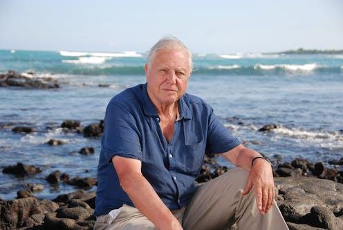origineel geautoriseerde site officiële winkel David Attenborough says the Great Barrier Reef is in 'grave ...