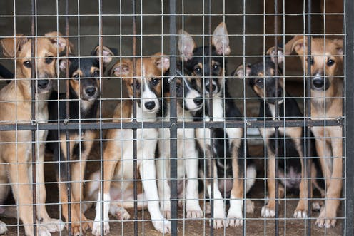 Britain faces a migration issue: European rescue dogs