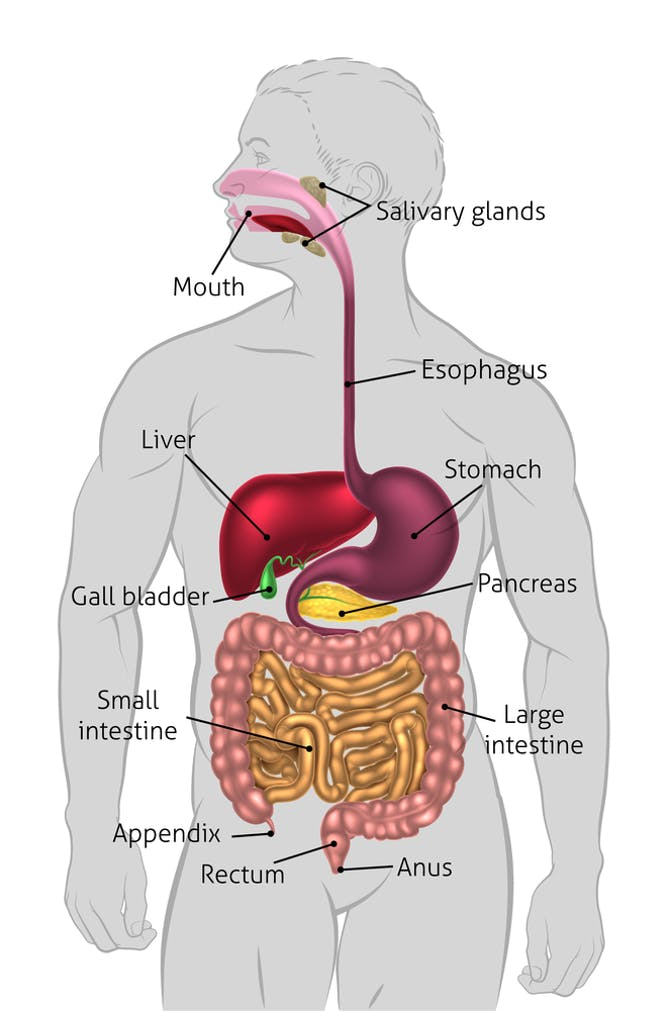 got gallstones? here's what to eat and avoid, Human Body