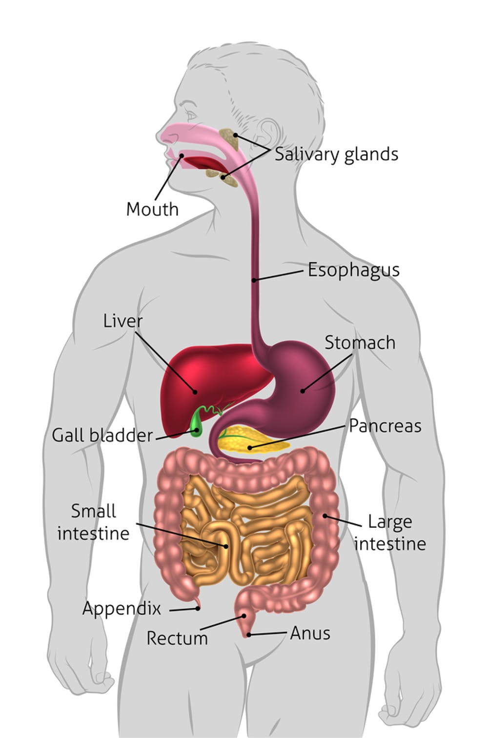 does a poor diet hurtyour gall bladder