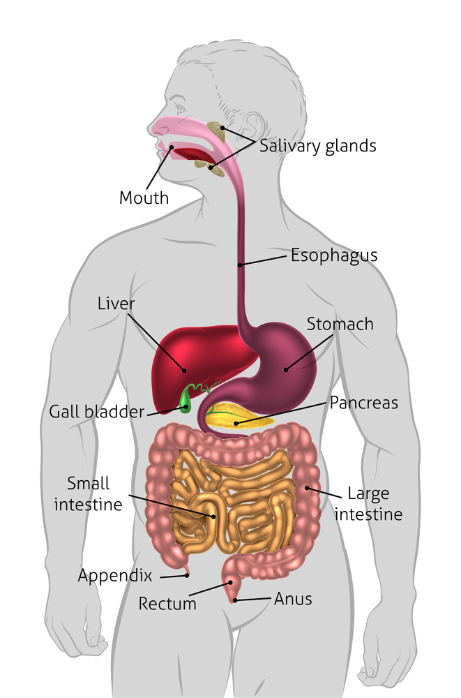 Got Gallstones  Here U0026 39 S What To Eat And Avoid