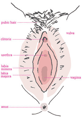 How to massage a girls vagina