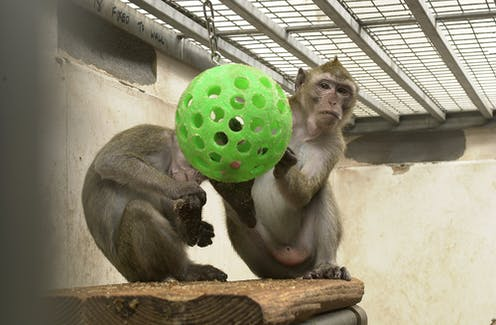 should animals be used for medical research