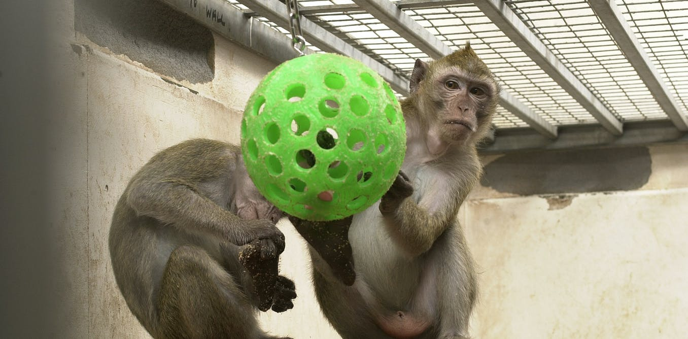 is using animals in medical research Animal research has played a big role in nearly every medical breakthrough over  using animals for research and experimentation has led to cancer survival.