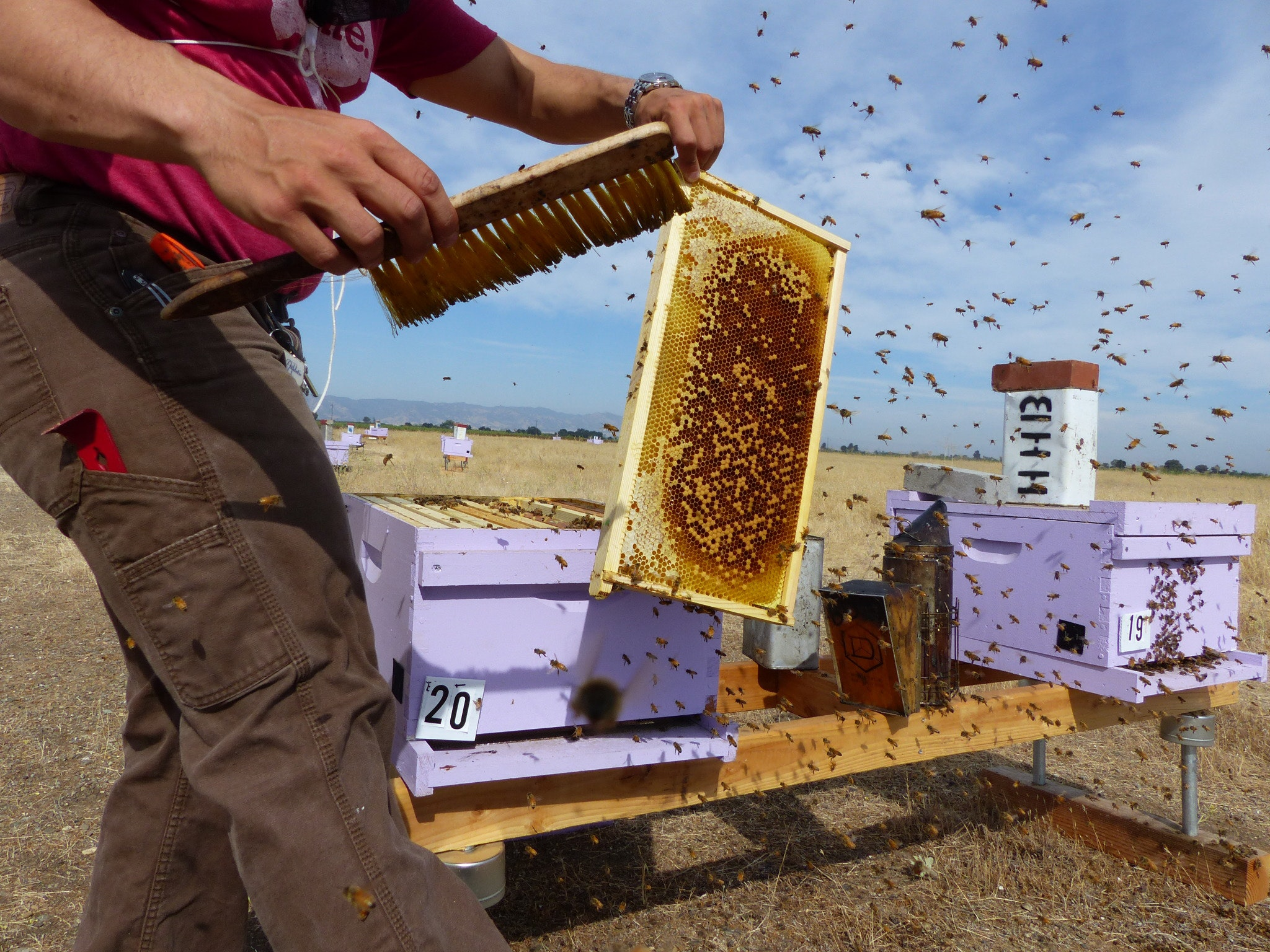 Deciphering the mysterious decline of honey bees