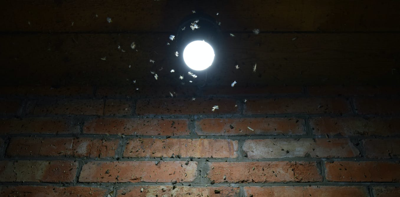 Fatal Attraction How Street Lights Prevent Moths From Pollinating Night Security Light