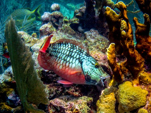 what do coral reefs provide