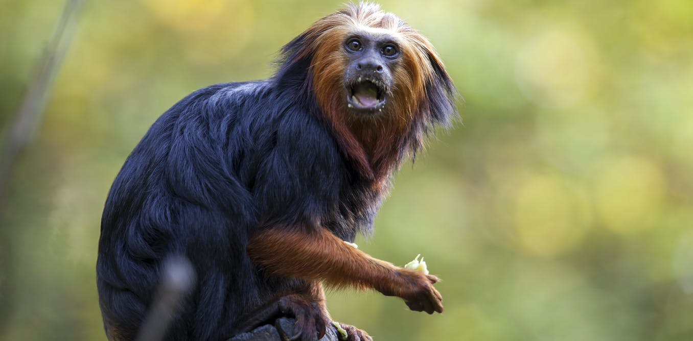 Monkeys in South America are almost all colour blind and no one ...