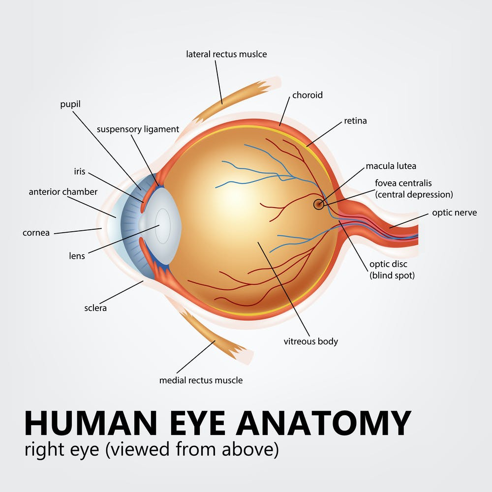 Explainer What Is Age Related Macular Degeneration